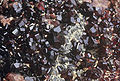 Hessonite garnet 0019.jpg