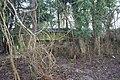 Hidden in the copse 2 - geograph.org.uk - 1738590.jpg