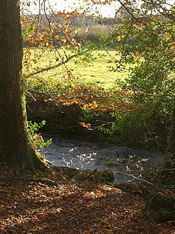 Holy Brook at Hembury Woods - geograph.org.uk - 1056421