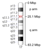 Map of Chromosome 17