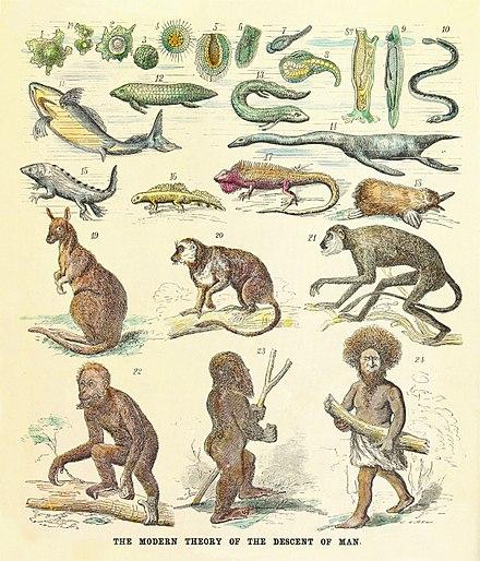 evolution of animals - 800×935