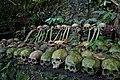 Human skulls, Trunyan, Lake Batur, Bali.jpg