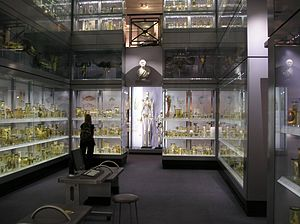 "Royal College of Surgeons of England - The skeleton of the seven and a half foot (231cm) tall ""Irish Giant"" is visible in the middle of this image."