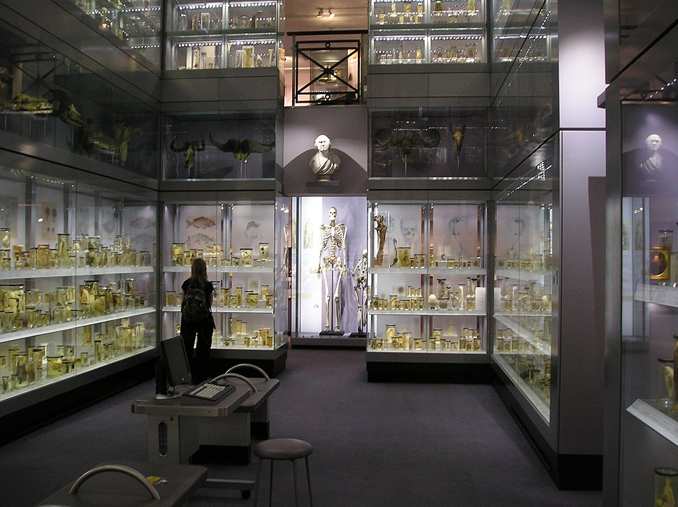 Hunterian Collection