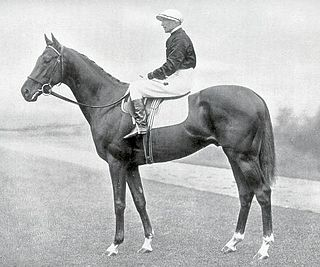Hyperion (horse) British-bred Thoroughbred racehorse