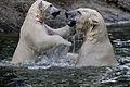 IJsbeer Huggies en Walker spelen samen (4037393325).jpg