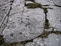 Ice-worn gritstone bedrock at Carreg Cadno - geograph.org.uk - 604776.jpg
