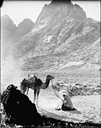 In the Sinai LOC matpc.09687.jpg