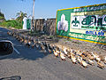 India - Sights & Culture - Overtaking ducks on the highway (2328581674).jpg