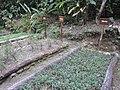 Inkaterra Machu Picchu Pueblo Hotel and Nature Reserve - Aguas Calientes, Peru (4876280412).jpg