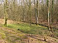 Islands Thorns Inclosure, New Forest - geograph.org.uk - 386676.jpg