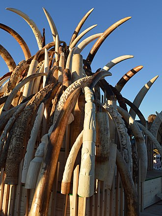 Traffic (conservation programme) - Ivory tower of tusks from poached elephants