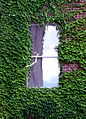 Ivy surrounding a window in a brick building.jpg