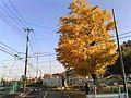 Izumicho, Izumi Ward, Yokohama, Kanagawa Prefecture 245-0016, Japan - panoramio.jpg