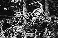Jōkon-1 1927.jpg