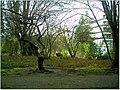January Frost Botanic Garden Freiburg Yapan Ahorn - Master Botany Photography 2014 - panoramio.jpg