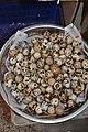 Japanese quail Coturnix japonica eggs by Dr. Raju Kasambe DSC 3217 01.jpg