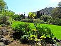 Jardín canario 63.JPG