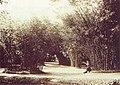 Jardim Botânico do Rio de Janeiro, 1890.jpg