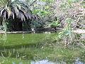 Jardim Botanico Tropical (14005320801).jpg