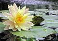 Jardins des Martels 2014-06-01T12-39-47.jpg