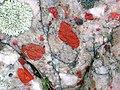 Jasper-quartz pebble conglomerate (Lorrain Formation, Paleoproterozoic, ~2.3 Ga; Ottertail Lake Northeast roadcut, near Bruce Mines, Ontario, Canada) 76 (47709757881).jpg