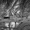 Javaanse kampong, waarschijnlijk in Nickerie, Bestanddeelnr 252-5518.jpg