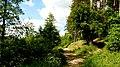 Jezioro Sępoleńskie ścieżka przy brzegu. - panoramio.jpg