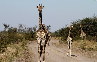 Central District (Botswana) - Wildlife around Boteti river
