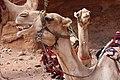 Jordan Petra (5574682222).jpg