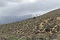 Jumbo Grade Trail - panoramio (71).jpg