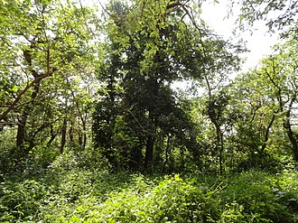 Ratapani Tiger Reserve - A view of the sanctuary