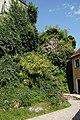 Königstein AS 005.jpg