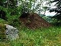 Kříženec (Hartmanice), mraveniště.jpg