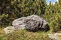 Kalksteenrots met in het midden een breccie. 10-09-2019. (actm.) 01.jpg