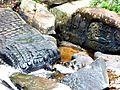 Kbal Spean - 018 Vishnu with Lingas near the Bridge (8584753052).jpg