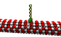 Kinesin cartoon.png