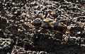 Kioloa fauna 88.jpg