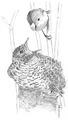 Kleine karekiet Acrocephalus scirpaceus Jos Zwarts 6.tif