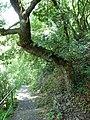 Knickbaum - panoramio.jpg