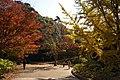 Kobe municipal forest botanical garden05s3872.jpg