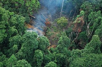 Cardamom Mountains - Aerial view of an illegal logging camp in the Cardamom Mountains in Koh Kong Province