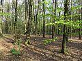 Krasnyy Khutir forest4.jpg