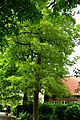Kreis Pinneberg, Naturdenkmal 06-26 Uetersen 02.jpg