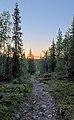 Kungsleden in Kvikkjokk-Kabla fjällurskog during golden hour (DSCF2497).jpg