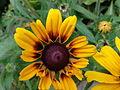 Kwiatek 74.jpg
