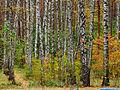 Kyiv Sovky Park18.JPG