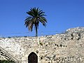 Kyrenia Castle and The Palm Tree - panoramio.jpg