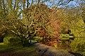 L'arbre aux milles branches (22511372119).jpg