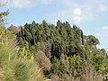 La Croce di Rontana soffocata dalla vegetazione - panoramio.jpg